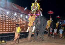 Elephant procession during a Temple Festival