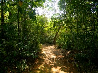 Holy Forest, the Sacred Grove at Muchukunnu,  Kozhikode